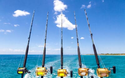 Fishing tourism: a day as a true fisherman