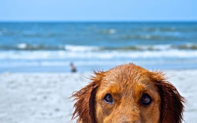 On the beach with Fuffy:  the pet-friendly beaches of the Riviera di Ponente